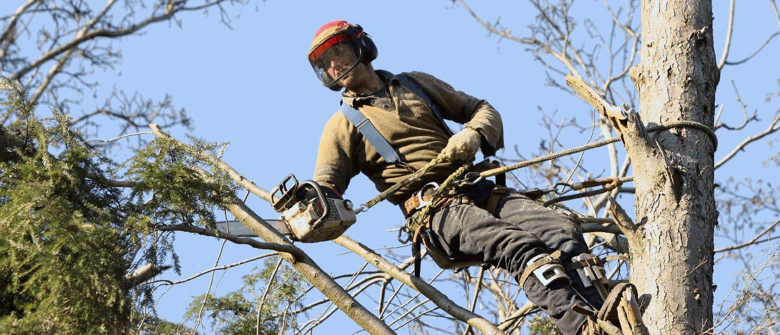 wycinka drzew alpinista